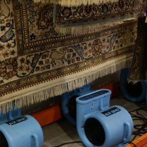 Make Sure Your Rug Is Dried Properly